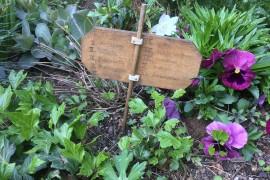 Gartenschau: 20. Juli, 14h, Mensa