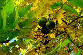 Wald im Trockenstress: Es schüttelt mich